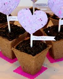 seed paper favors studio 5 seed paper