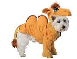 Dog Shark Halloween Costume 12 Dog Halloween Costumes Pets Blue Blog