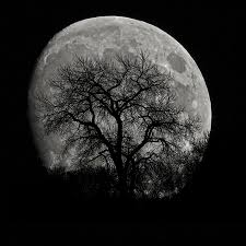 tree silhouette on moon photograph by ernie echols