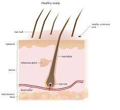 what gets rid of dht in body how to remove dht from your scalp and trigger sudden new hair growth