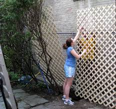 Decorate A Chain Link Fence 9 Best Privacy Fence Images On Pinterest Fence Ideas Backyard