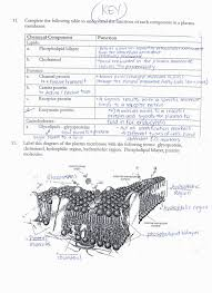 cell membrane coloring worksheet answer key coloring pages