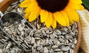 5 super health benefits of sunflower seeds care2 healthy living