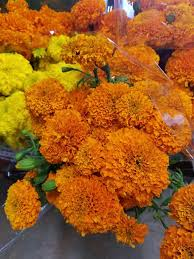 Flowers Wholesale Growers Direct Flowers Wholesale Costa Mesa 41 Photos 1