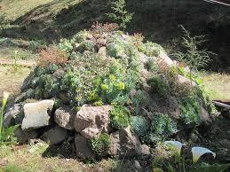 the 25 best succulent rock garden ideas on pinterest outdoor
