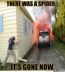 23 Funny Spider Memes Weneedfun - 383 best laugh images on pinterest channel laughing and politics