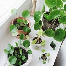 Tropical House Plants Names - 248 best succulent images on pinterest indoor plants plants and