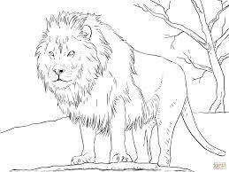 coloring lion coloring picture