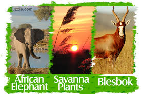 5 Dominant Plants In The Tropical Rainforest Grassland Biome Animals And Plants Inhabiting This Natural Wonder