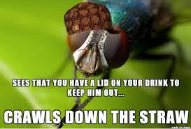 Fly Meme - scumbag fly meme on imgur