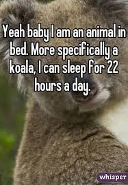 Animal In Bed Meme - baby i am an animal in bed more specifically a koala i can sleep