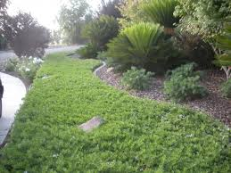quality growers inc ground cover