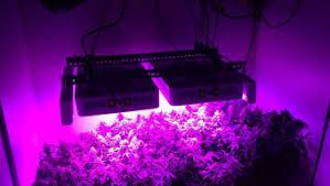 Led Grow Lights Cannabis 420 Big Bud Growing Guide U0026 Weed Product Reviews