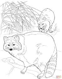 two north american raccoons coloring page free printable