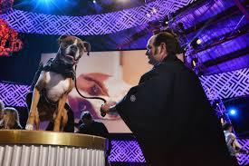 boxer dog 2015 world dog awards honor star pets the blade