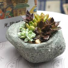 How To Make A Succulent Planter by 25 Indoor And Outdoor Succulent Gardens Of All Sizes Garden