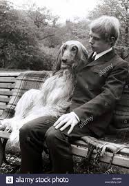 afghan hound dog images an afghan hound with his owner sitting on a bench msi stock photo