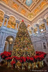 best 25 christmas tree photography ideas on pinterest nikon