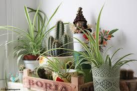 plante pour cuisine la cagne à la ville plantes dépolluantes et fleurs à