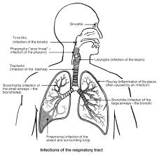 chest infection symptoms diagnosis and treatment patient