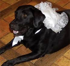 Dog Wedding Dress Pet Wedding Accessories Pet Tux