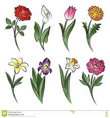 drawing collection of daisy flowers set sketch illustration stock