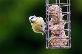Backyard Wild Birds Top 10 Backyard Bird Feeding Mistakes