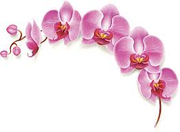 Flower Orchid Orchid Clip Art Vector Images U0026 Illustrations Istock