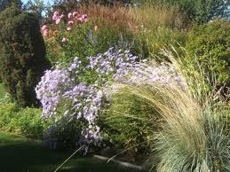 try the english cottage garden style garden pics and tips