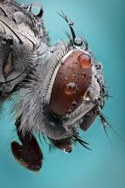 water droplets on an ordinary insect in micro photography that