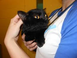 more problems with cat care at companion animal alliance yesbiscuit