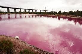 the pink lake westgate park melbourne by ozventurer