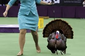 thanksgiving horror stories thanksgiving movie pitches
