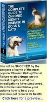 boxer dog kidney problems 21 best feline kidney disease images on pinterest kidney disease