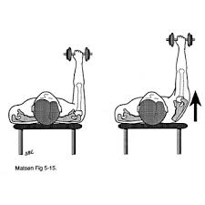 Muscles Used During Bench Press Yess Training Llc September 2007
