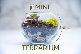 succulent terrarium mini mini terrarium diy terrarium gardening