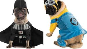 party city halloween costomes the most popular halloween costumes for pets from u0027star wars u0027 to