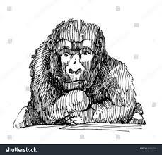 sketch monkey sketch gorilla stock vector 367433555 shutterstock