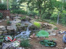 backyard pond ideas for your landscape lexington kentucky ky