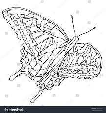 butterfly coloring book older children stock vector