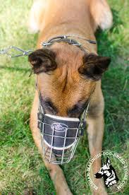 belgian malinois dog get belgian malinois wire cage muzzle