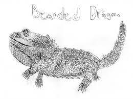 bearded dragon drawing draw cool cartoons draw