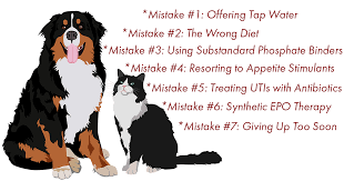 7 mistakes in treating pets with chronic renal failure
