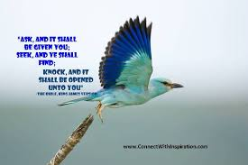 birds quotes pictures and birds quotes images 37