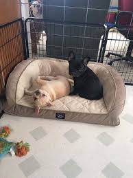 epic french bulldogs home facebook