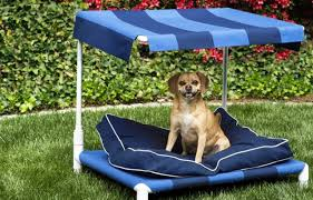 Dog Patio 6 Ways To Make Your Patio More Pet Friendly Kitchn