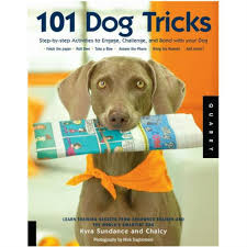 belgian malinois 101 youtube holiday gift guide for active dogs 2016 american kennel club