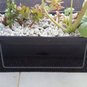 Balcony Planter Box by Succulent And Cactus Arrangement Balcony Planter Box Succulent