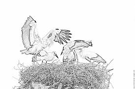 storks nest arrival father coloring pages printable