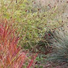 a grass for every location ornamental grasses taking in